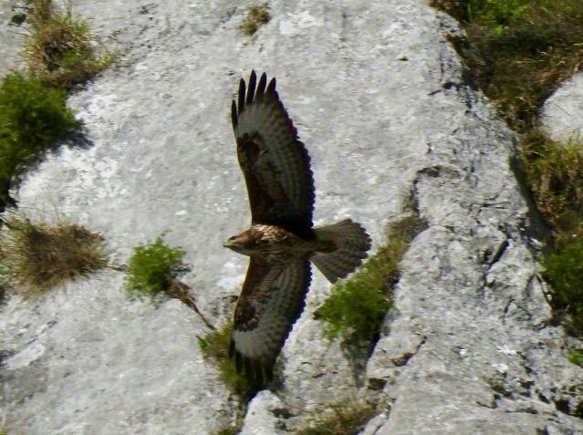 avistamiento fauna salvaje Asturias