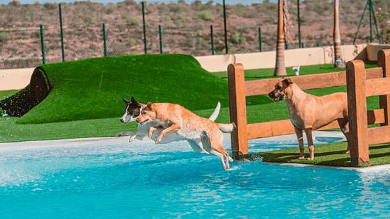 hotel perros