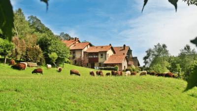 hoteles para perros en asturias