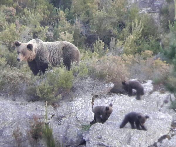 avistamiento fauna
