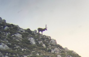 ciervos en parque nacional