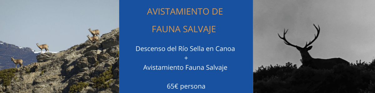 alistamiento fauna salvaje asturias